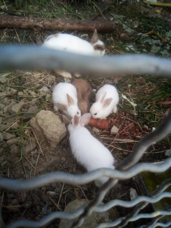 Продаём крольчат  хорошие и милые ждут заботливого хозяина 89654732081